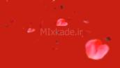 فوتیج گلبرگ گل رز- 112203