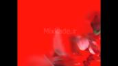 گل رز-کد 112204