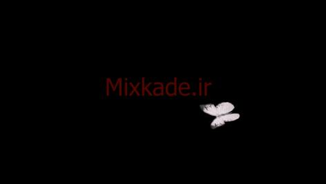 فوتیج پروانه