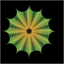 آموزش کاربردی ایلاستریتور- رسم طرح تارعنکبوتی